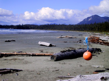 Tofino land for sale.